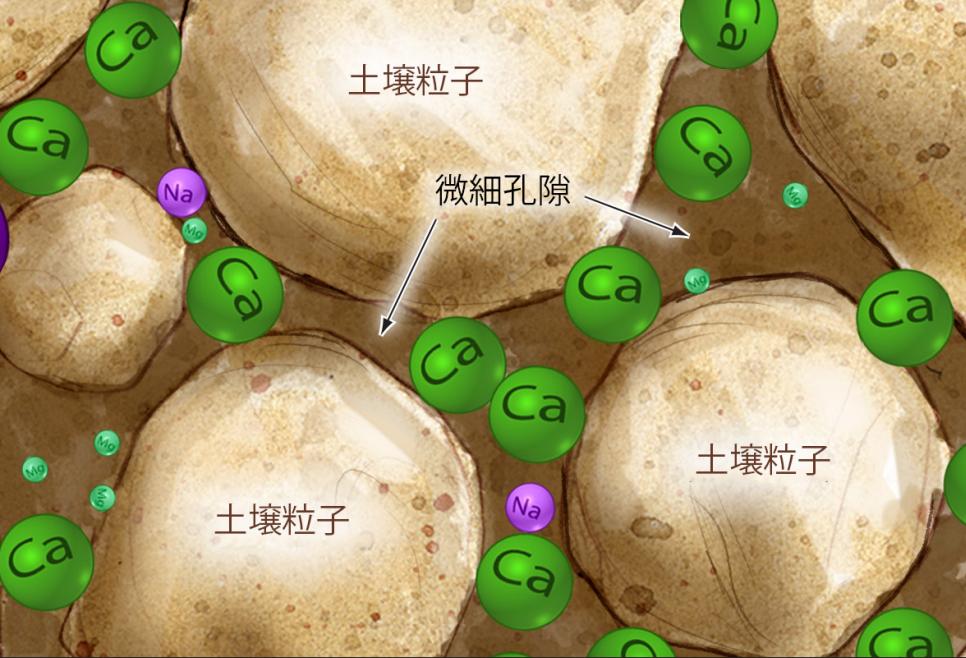 RedoxリドックスPeneCaI (ペネカルは活性化 カルシウムを使って、最適な微細孔隙の構造を造る。